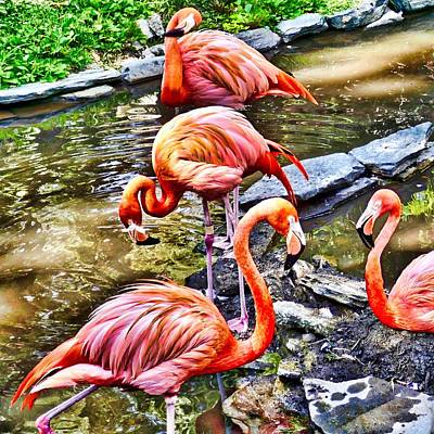 Photograph - Pretty Pink Flamingos by Joan Reese