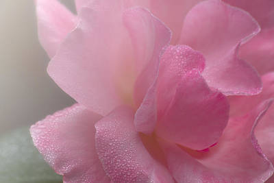 Photograph - Pretty Pink Flower by Taylor Moore