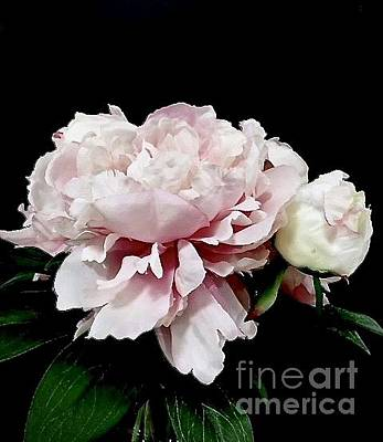 Photograph - Pretty Pink Peony Bouquet by Jeannie Rhode