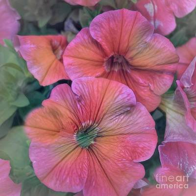 Photograph - Pretty Pink Petunia Art by Luther Fine Art