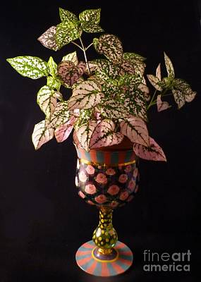 Photograph - Pretty Polka Dot Plant by Barbie Corbett-Newmin