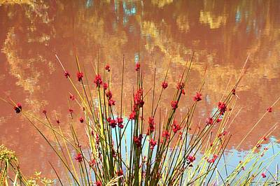 Photograph - Pretty Pond Weeds by Ellen Barron O'Reilly
