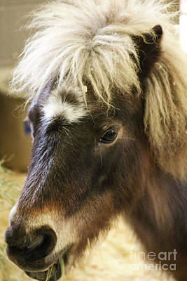 Photograph - Pretty Pony by Suzanne Luft
