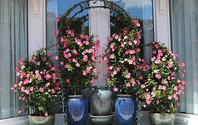 Photograph - Pretty Pots In Pink by Living Color Photography Lorraine Lynch