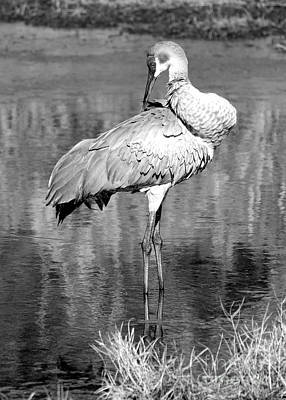 Photograph - Pretty Preener Black And White by Carol Groenen