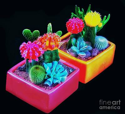 Photograph - Pretty Prickles by Blair Stuart