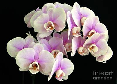 Photograph - Pretty Profusion Of Orchids by Barbie Corbett-Newmin