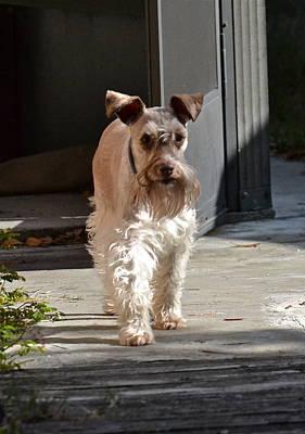 Photograph - Pretty Pup by Carol  Bradley