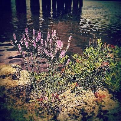 Purple Wall Art - Photograph - Pretty Purple Flowers Along The Bayou by Joan McCool