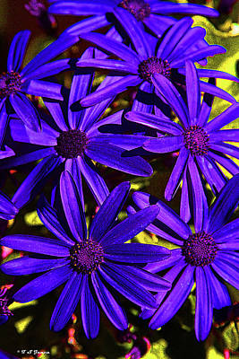 Digital Art - Pretty Purple Flowers by Tom Janca