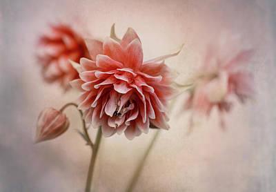 Photograph - Pretty Red Columbine by Jaroslaw Blaminsky
