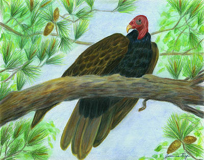 Pretty Redhead Turkey Vulture Art Print