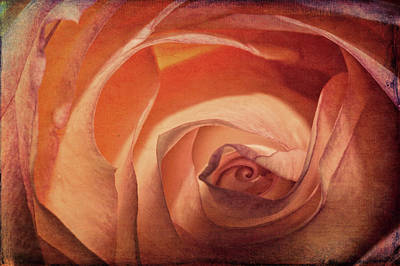 Digital Art - Pretty Rose by Joe Sparks