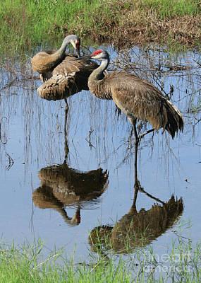 Photograph - Pretty Sandhill Pair In Pond by Carol Groenen