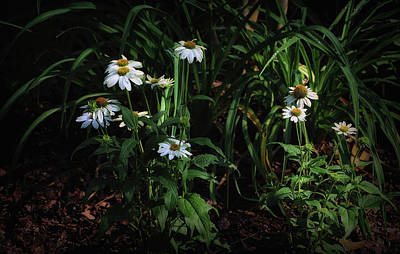 Photograph - Pretty Scenic  by Elaine Malott