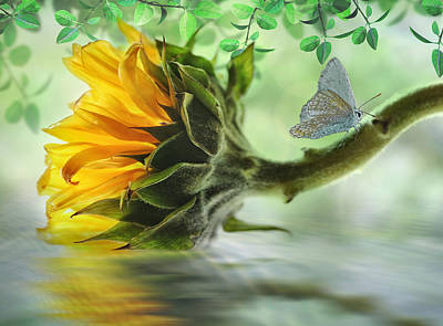 Digital Art - Pretty Sunflower by Nina Bradica