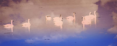 Photograph - Pretty Swans All In A Ro by Marty Koch