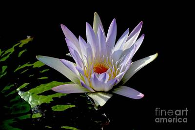 Photograph - Pretty Water Lily by Jeannie Rhode