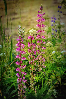 Photograph - Pretty Wildflowers by Debra and Dave Vanderlaan