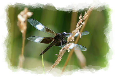 Photograph - Pretty Wings by Dan Friend