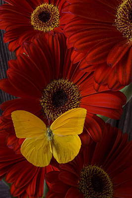 Pretty Yellow Butterfly Art Print