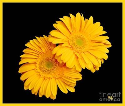 Photograph - Pretty Yellow Gerbers by Marsha Heiken