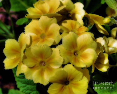 Pretty Yellow Primrose Art Print by Smilin Eyes  Treasures