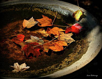 Photograph - Priceless Leaves Fall by Reid Callaway