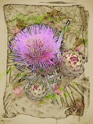 Digital Art - Prickly Beauty by Lisa Schwaberow