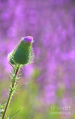 Photograph - Prickly Beauty.. by Nina Stavlund