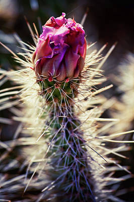 Photograph - Prickly Beauty Pink by Tatiana Travelways