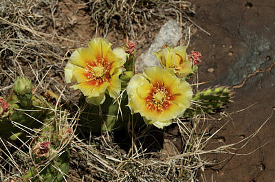 Mellow Yellow - Prickly Blossoms by Julia McHugh