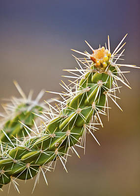 Photograph - Prickly Branch by SR Green