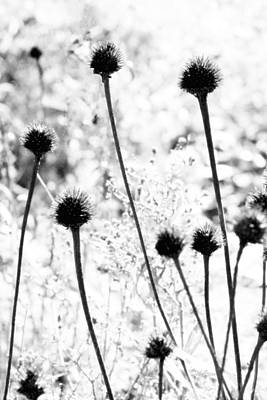 Art Print featuring the photograph Prickly Buds by Deborah  Crew-Johnson