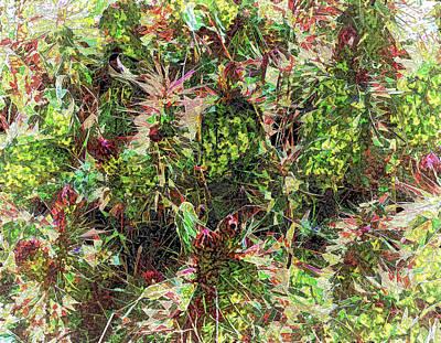 Digital Art - Prickly Conference Of Elders by Aliceann Carlton