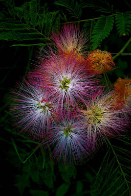 Photograph - Prickly Flower by Christopher Lugenbeal