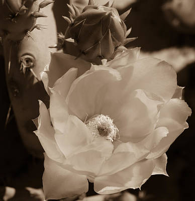 Photograph - Prickly Flower by Laurel Powell