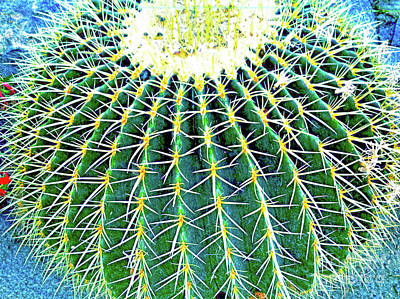 Photograph - Prickly Fun by Roselynne Broussard