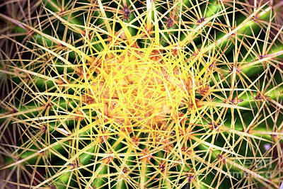 Photograph - Prickly by John Rizzuto