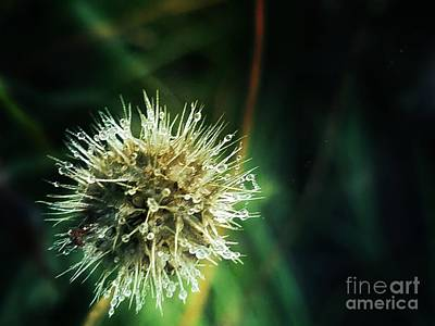 Photograph - Prickly by Maria Urso