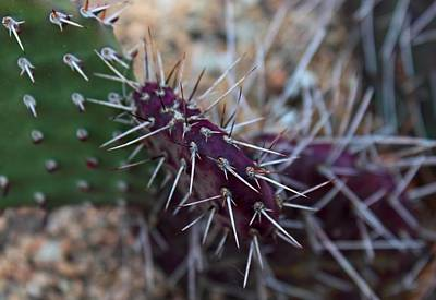 Photograph - Prickly by Michiale Schneider