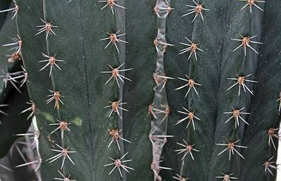 Photograph - Prickly Pattern by Michiale Schneider