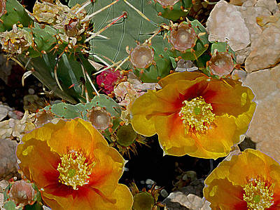 Photograph - Prickly Pear Aglow by Lynda Lehmann