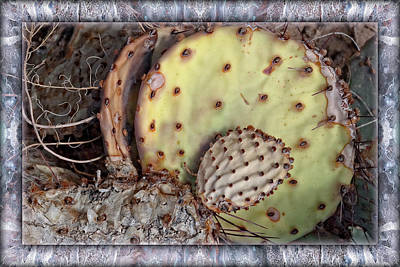 Digital Art - Prickly Pear by Becky Titus