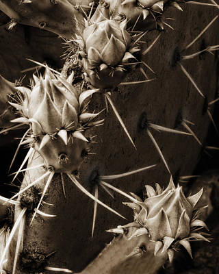 Prickly Pear Buds Art Print