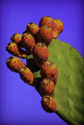 Cactaceae Photograph - Prickly Pear Cacti by Garry Gay