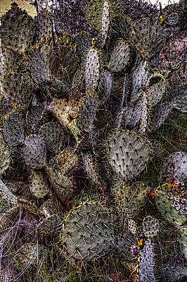 Photograph - Prickly Pear Cactus At Tonto National Monument by Roger Passman
