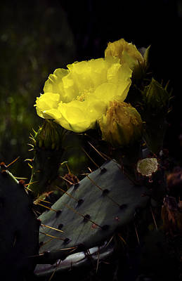 City Lights - Prickly Pear Cactus Flower by Greg Reed