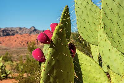 Prickly Pear Cactus Print by Paul Freidlund
