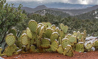 Dry Creek Photograph - Cactus Country by Racheal Christian
